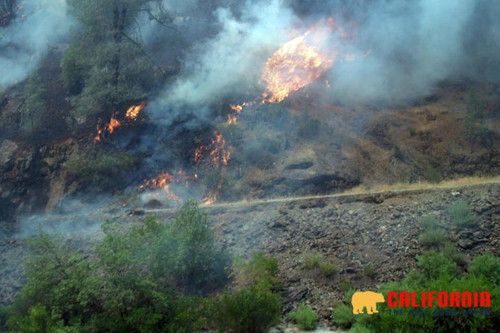 7 Tips for Preventing Wildfires
